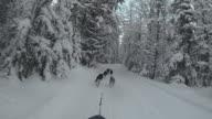 POV Dog sled riding through snowy forest