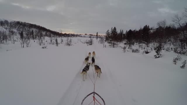 POV of Dog sledding in Arctic Norway