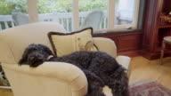 dog sleeping in den