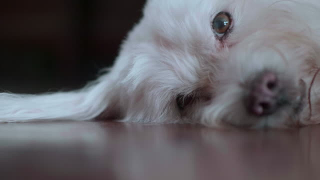 Hond slapen op de vloer
