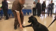 Dog Therapy at Rikers for Juvenile Inmates The dogs are brought to Rikers Island from a city shelter to help combat violence within the jail...