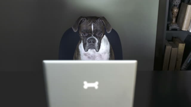Dog watches a video in her office, with monitor flicker