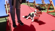 Dogs and their carers and owners are seen walking the red carpet for the Doggie and Deck Chair charity premiere at QV Melbourne on December 8 2016 in...