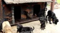 Cani Senzatetto