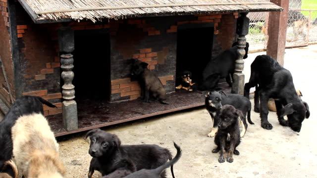 dogs homeless