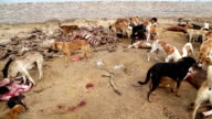 Dogs Hunting Dead Animal