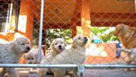 Hundar i bur