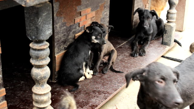 dogs in the small house