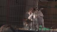WGN Dogs Left Homeless by Hurricane Harvey Arrive at Animal Shelter in Chicago in PAWS Vans on Sept 3 2017