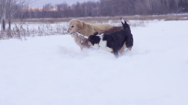 Dogs Playfully Fighting