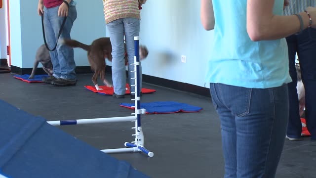 WGN Dogs playing at the the Zoom Room where they can do a variety of activities from taking agility classes to free play on in Chicago Illinois