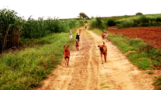 Dogs running in the nature