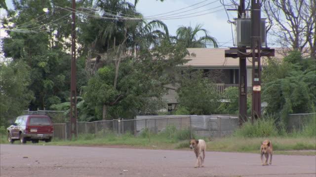 Dogs walk across a village street.
