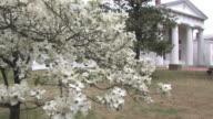 Dogwoods in Arkansas -- HD
