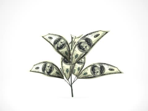 Dollar tree growing - alpha matte, NTSC