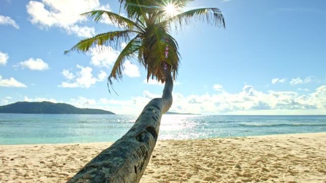 Dolly: Beautiful beach of Anse Fourmis