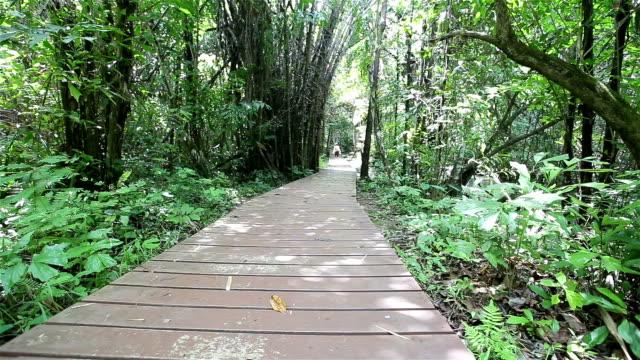 Dolly HD: Brücke durch den Wald