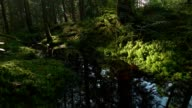 Dolly: Creek in green forest