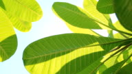 Transportwagen: Grüne Blätter