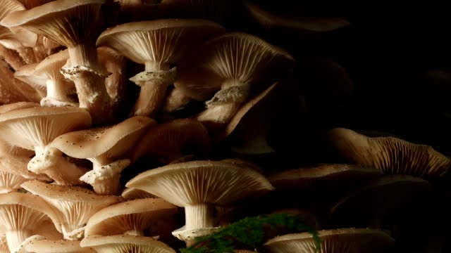 Dolly: mushrooms in the forest