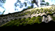 Dolly shot 4K, Green moss on roof.