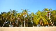 Dolly Shot: Beach and Row of Palm Tree