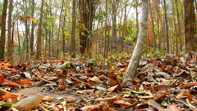 Dolly Shot: Dry Leafs on the Ground in Dry Forests
