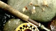 Dolly skott flyga fiske lockbete.