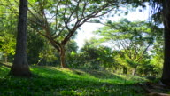 Dolly Shot: Nature in Green Forests