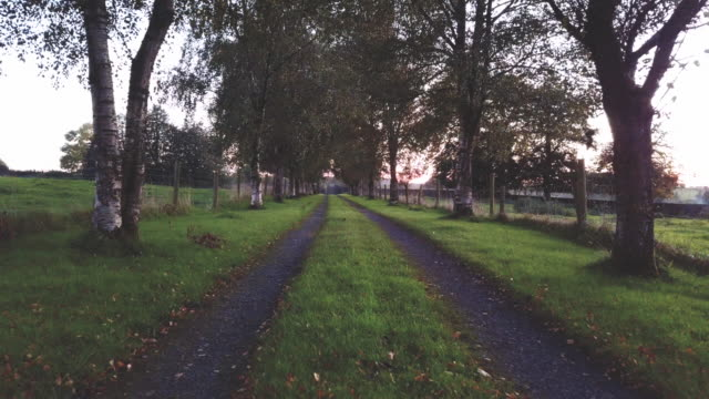Dolly shot of a tree lined driveway to an Irish farm.