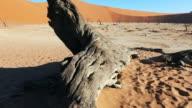 Dolly Shot of dead tree in the namib desert
