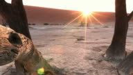 Dolly Shot of dead trees in the namib desert