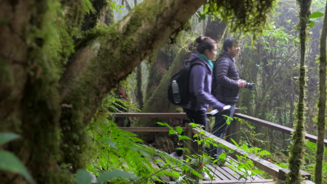 Dolly Shot:couple Traveler is sightseeing in forest
