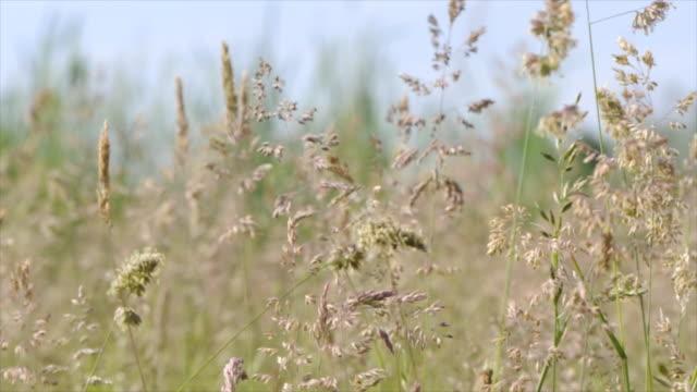 Dolly: Wildflowers in swamp landscape, summer field
