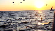 HD Dolly:Birds flying on the sea in the evening near sunset.