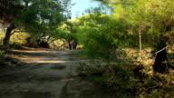 HD DOLLY:Cycling at Nature