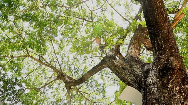 Dolly:Green Tree