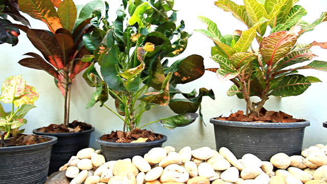 HD Dolly:Potted plants in the garden.