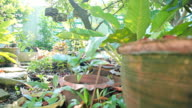 Dolly:Potted plants in the garden