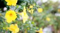 HD dolly:Spring background with beautiful yellow flowers