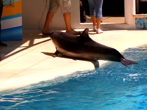 Dolphin in aquapark