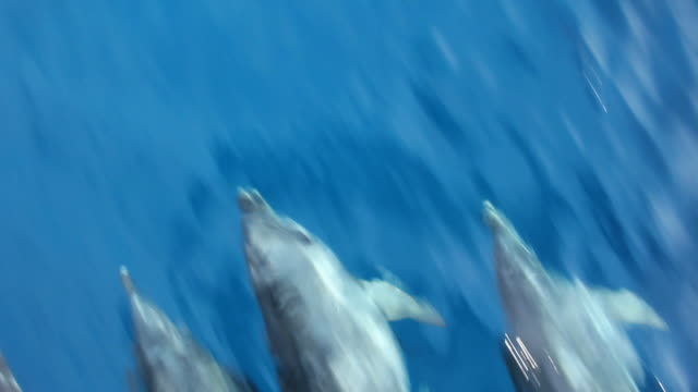 Dolphin's swimming.