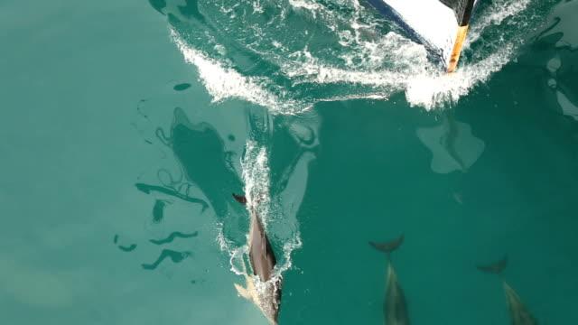 Dolphins Fahren Sie mit dem Schiff