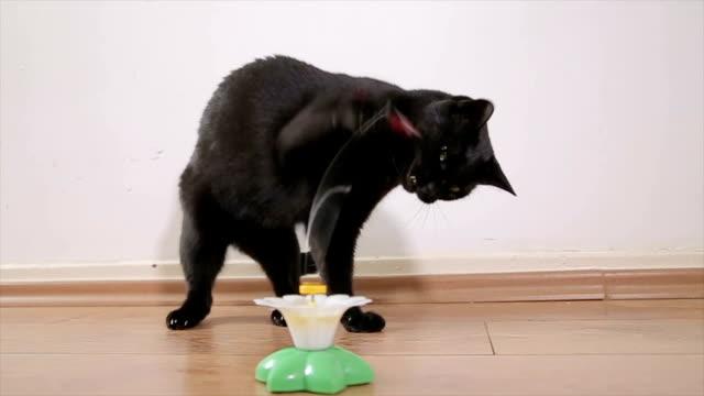 Hauskatze mit Katzenspielzeug spielen
