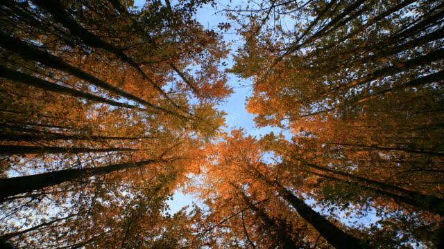 Douglas fir forest low angler
