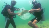 Dozens of captive sharks have been released in the Gulf of Thailand to highlight the plight of the endangered creatures Pattaya Thailand