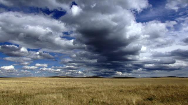 Dramatic cumulonimbus clouds in deep blue sky with shadows falling across golden grassed prairie.