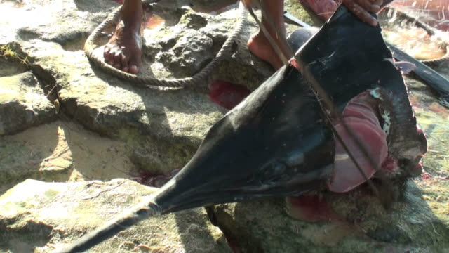 Dramatic live reportage of a poaching episode (marlin dissection)