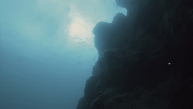 'Dramatic upwards shot of the surface of the ocean, silhouetted fish and rock formations'