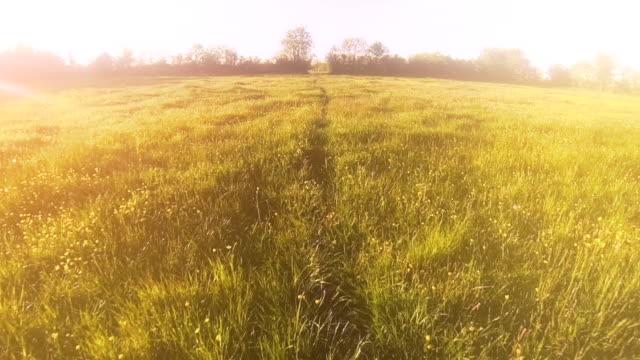 Traumhafte Felder
